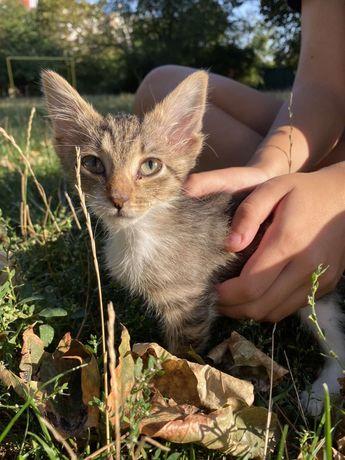 Ніжна кішка-дівчинка з великими вушками