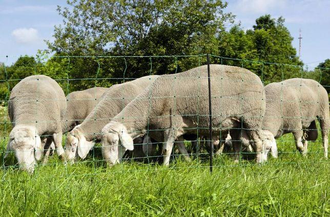 Vedação eléctrica/Rede/Cerca eléctrica 1,12X50m ovelhas/cabras/cavalos