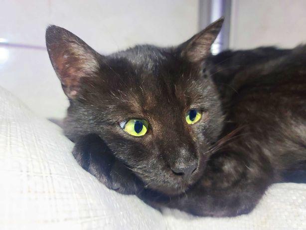 Кот Вася чорний, спокійний, ласкавий та дуже розумний ( котики)