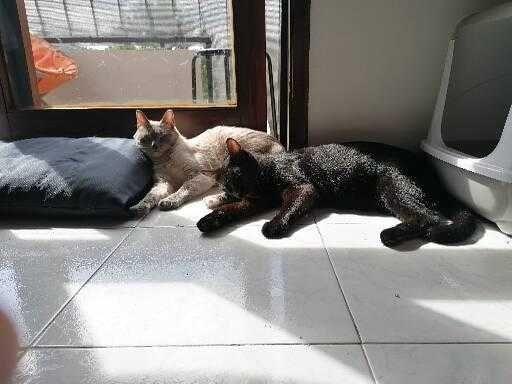 2 Gatos para adoção