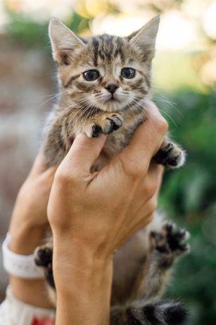 Кошеня у доьрі руки.