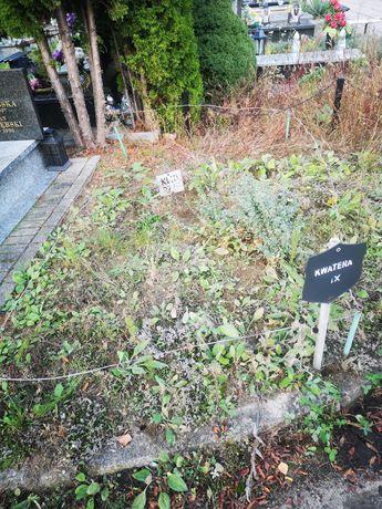 Plac glebinowy na cmentarzu