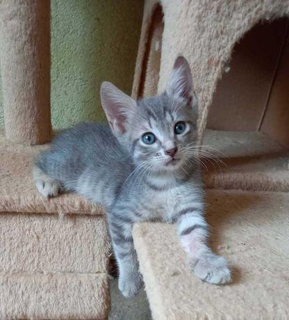 Красивый полосатый котёнок, энергичный мальчишка, 3,5 месяца