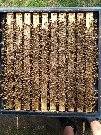 Odkłady pszczele. Zapisy 2021