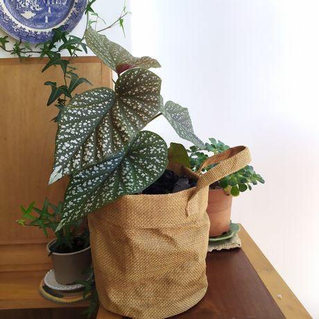 Planta média interior