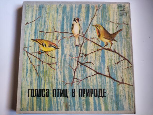 Пластинка платівка гранд птицы Голоса птиц в природе (5 штук)