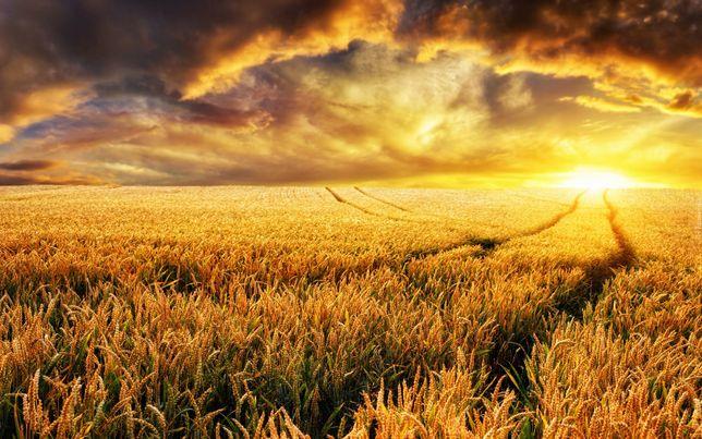 Sprzedam gospodarstwo, ziemia, grunt, działka rolna, nieruchomość