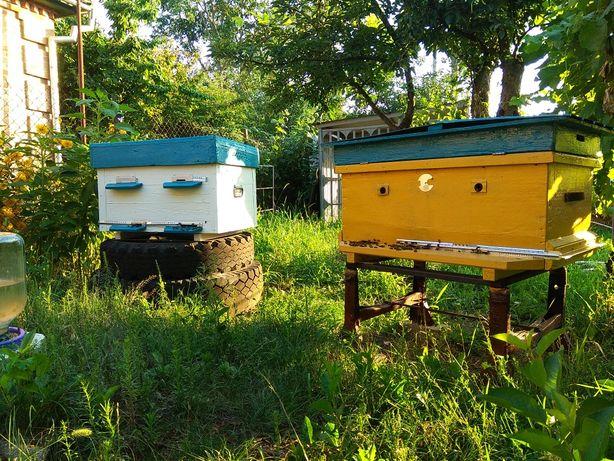 Ульи с пчелами, бджолосім'ї, пчелосемьи, бджоли, пчелы, вулики,