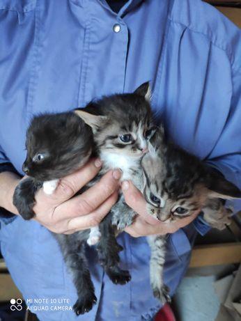 Котенята котики , кіт.