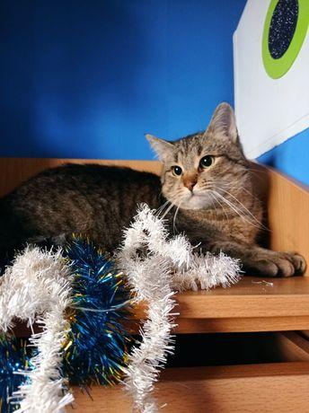 Красивый полосатый котик