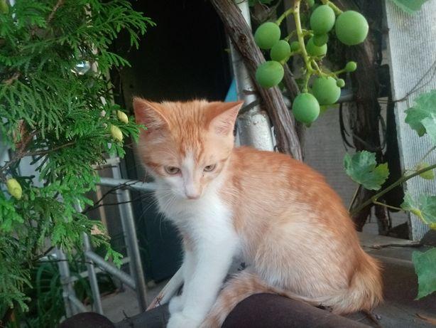 СРОЧНО нужен дом котятам