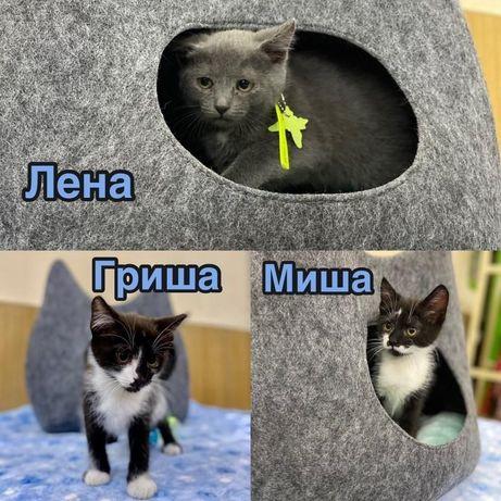 Котята, девочка и мальчик в добрые руки