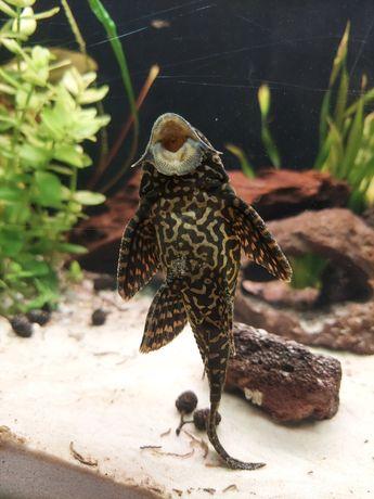 Sprzedam lub zamienię na rośliny akwariowe