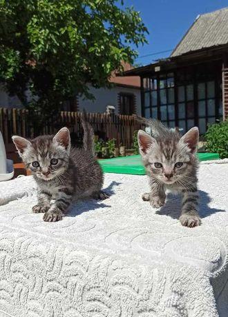 Maleńkie kocie dzieci- adopcja