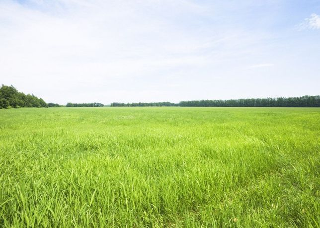 Земельный участок (пай)