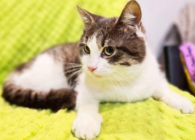 Красавчик котик Макс! 1 годик