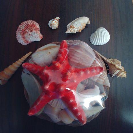 Морскиая звезда и раковины