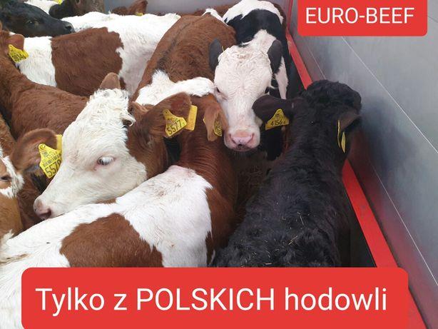 sprzedam jalowki polskiego pochodzenia