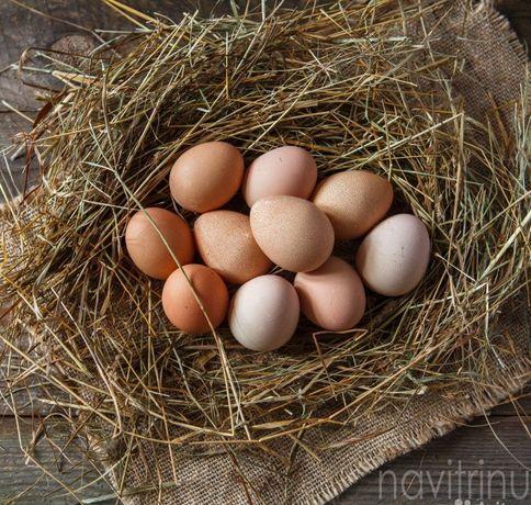 Домашни куриние яйця