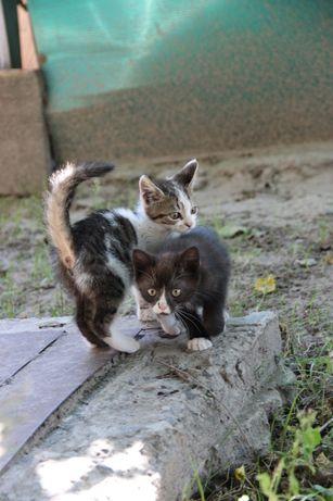 Котенок в семью