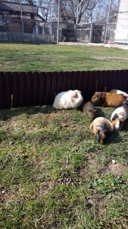 Милейшие свинюшки