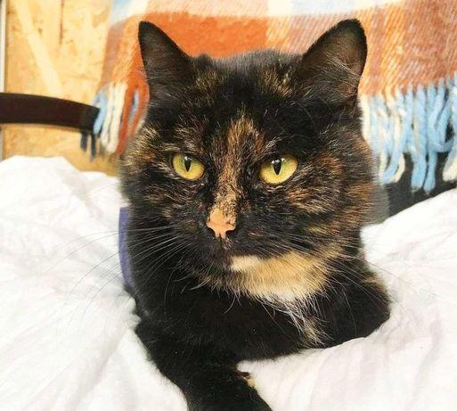 Черепахова кішечка Джелі 1 рік в найкращу сім'ю! Кіт кішка кошеня