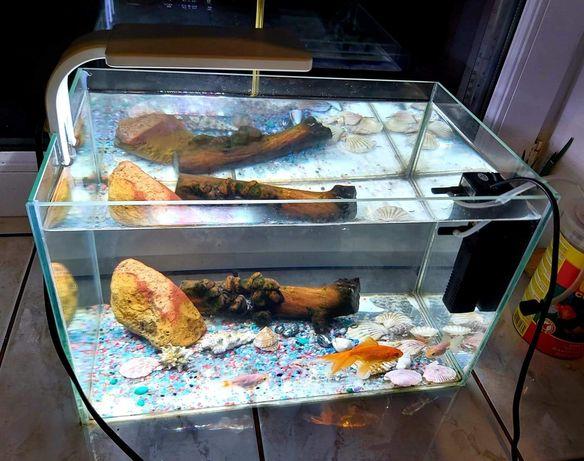 Akwarium z dużą welonką
