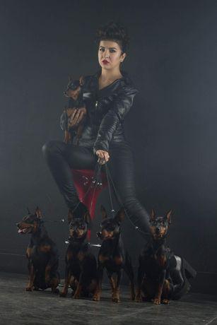 Цвергпинчер- король миниатюрных собак
