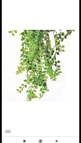 Bluszcz do dekoracji, zielenina do ścianki