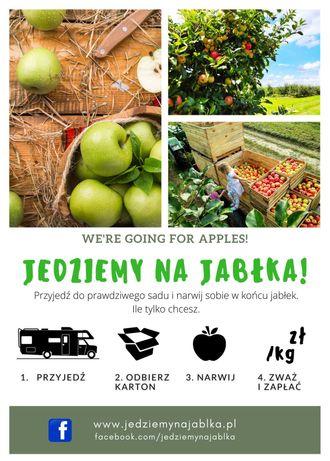 Samozbiory jabłek - przyjedź do sadu na jabłka prosto z drzewa