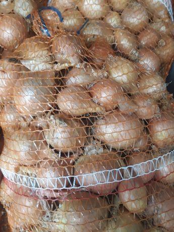Cebula,Marchew,buraczki,pietruszka,czosnek, ziemniaki.