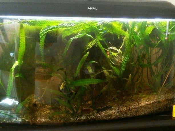 Akwarium 200 litrów z całym osprzętem filtr ryby rośliny sprawne