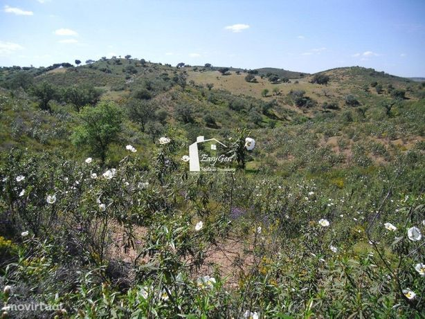 Terreno Rustico de 5 hectares junto à estrada nacional e ...