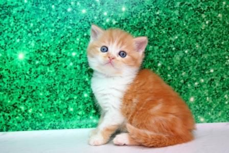 Котик яркий красавчик