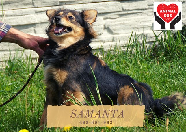SAMANTA - niewielka suczka szuka domu
