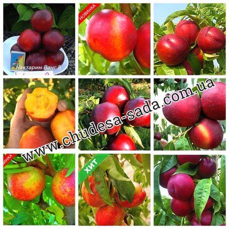 Саженцы крупноплодных сортов персика, нектарина, абрикоса. Опт и розни