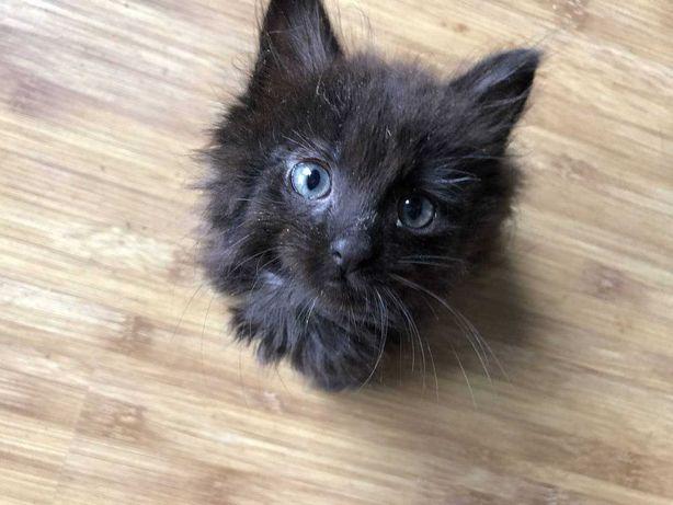 Малеча шукає дім! Милі та грайливі котеняти!