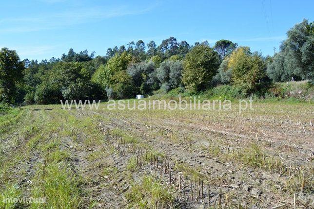 Terreno Agrícola - Bouro Sta Maria