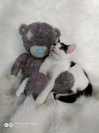 Милейший котенок Каспер 3 мес. А поиски нового дома.