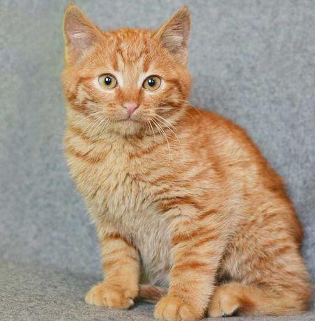 Маленькая рыжая девочка по имени Фанта, 2 месяца