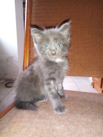 Отдам котёнка и кошечку в хорошие руки
