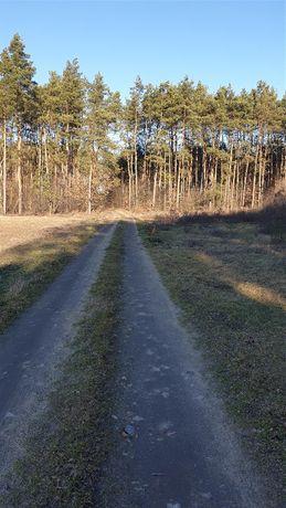 Leśna polana, działka budowlana w Obrowie malownicze położenie.