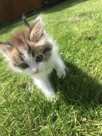 Віддам котика