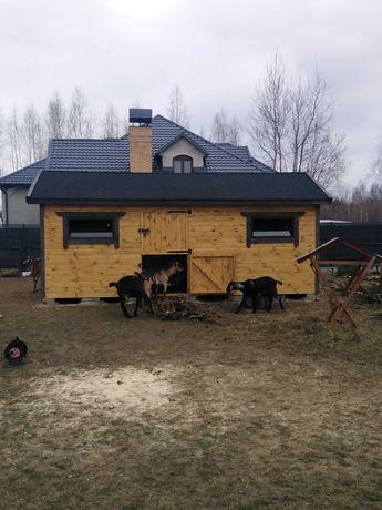 Stajnia 6x3 koziarnia, domek dla Osiołka, alpak