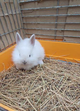 Декоратинвные кролики