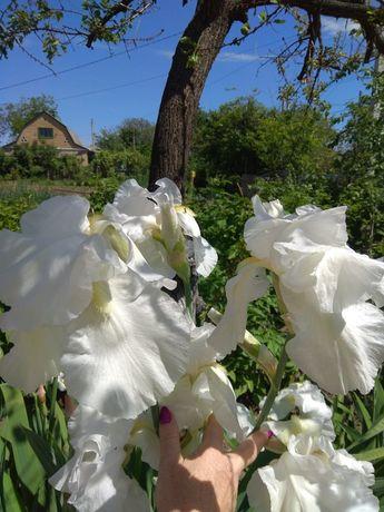 Цветы пионы,ирисы,