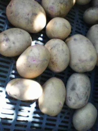 Vendo batatas novas, em saco de 20 kg