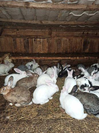 Кролики, кролі продам оптом