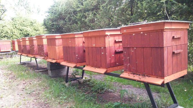 Pszczoły na ramce wielkopolskiej