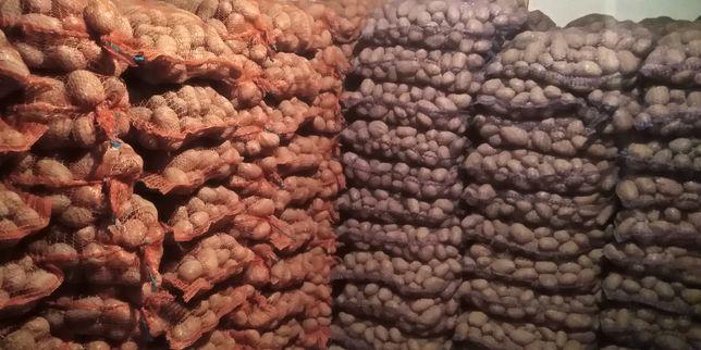 Ziemniaki jadalne: Bellarosa, Vinieta, Red Sonia